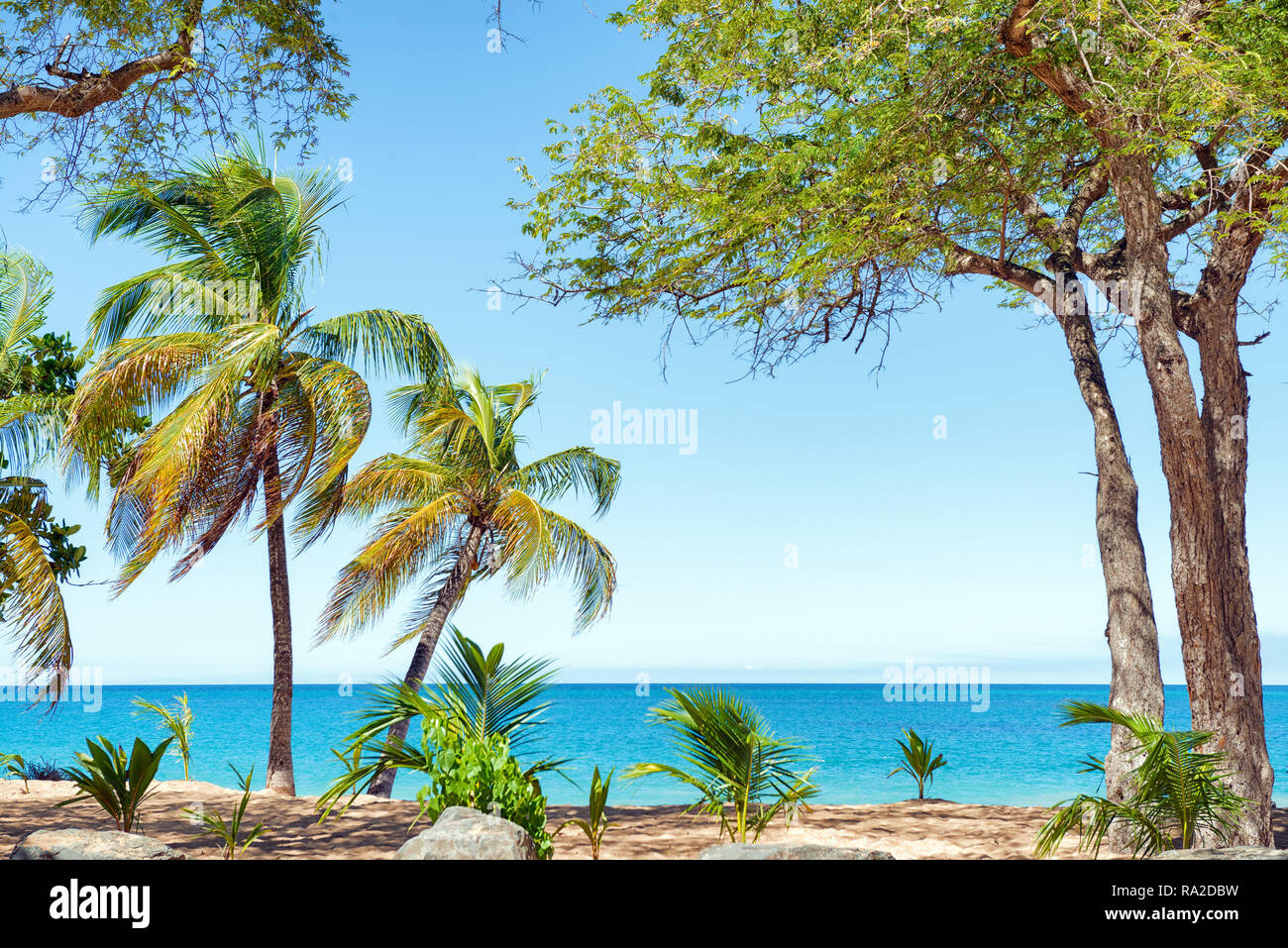 Cocotiers, sable doré, l'eau turquoise et bleu ciel, le Pearl Beach , Guadeloupe, French West Indies Banque D'Images