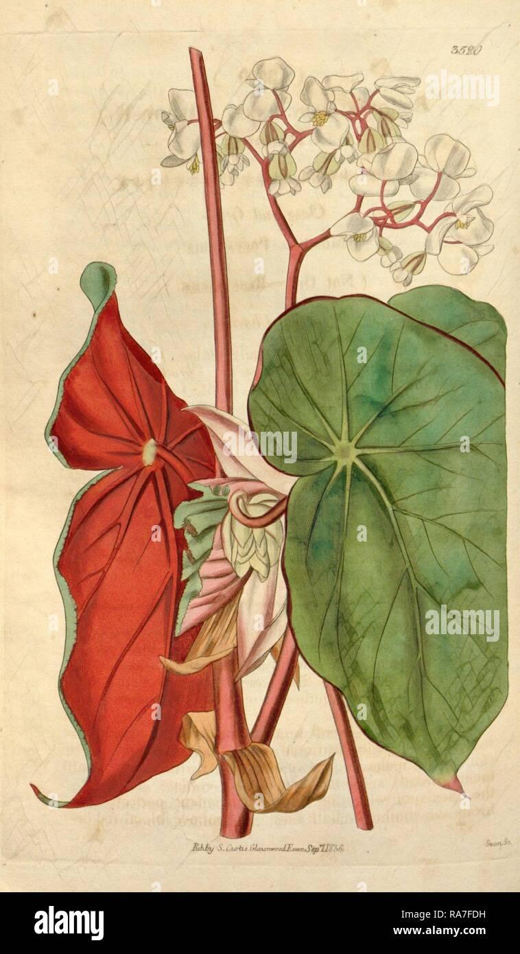 Jardin botanique d\'imprimer ou de l\'anglais histoire illustration ...
