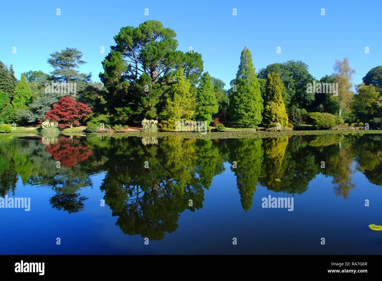 Couleurs d'automne dans la région de Sheffield Park Gardens, East Sussex, UK Banque D'Images