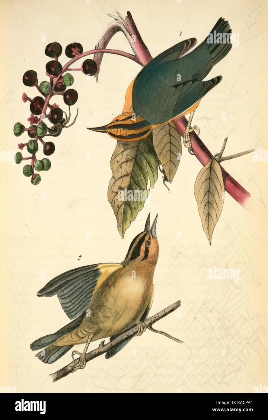 20 graines-Indien Amérique Phytolacca acinosa