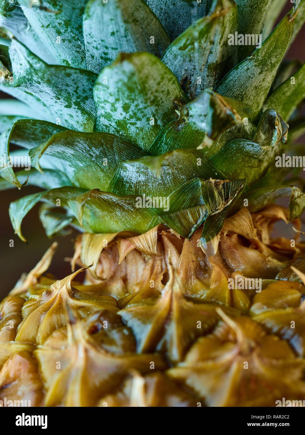 Libre de droits photographie-vie encore d'ananas Photo Stock