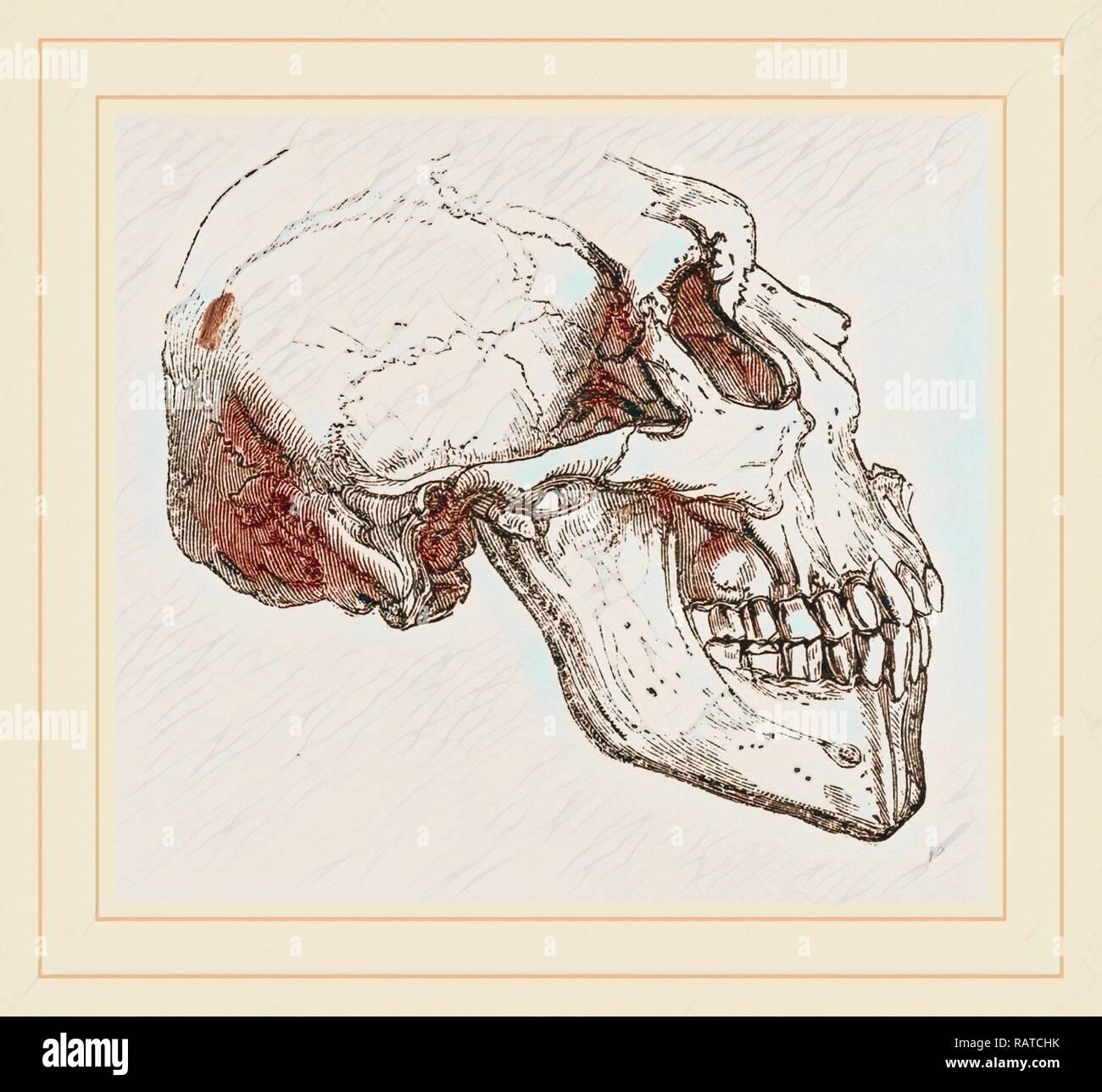 Crâne de l'idiot. Repensé par Gibon. L'art classique avec une touche moderne repensé Photo Stock