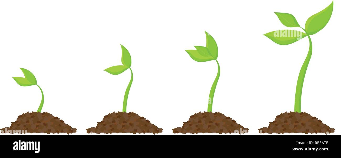 Plant Seed Germination Vector Icon Photos Plant Seed