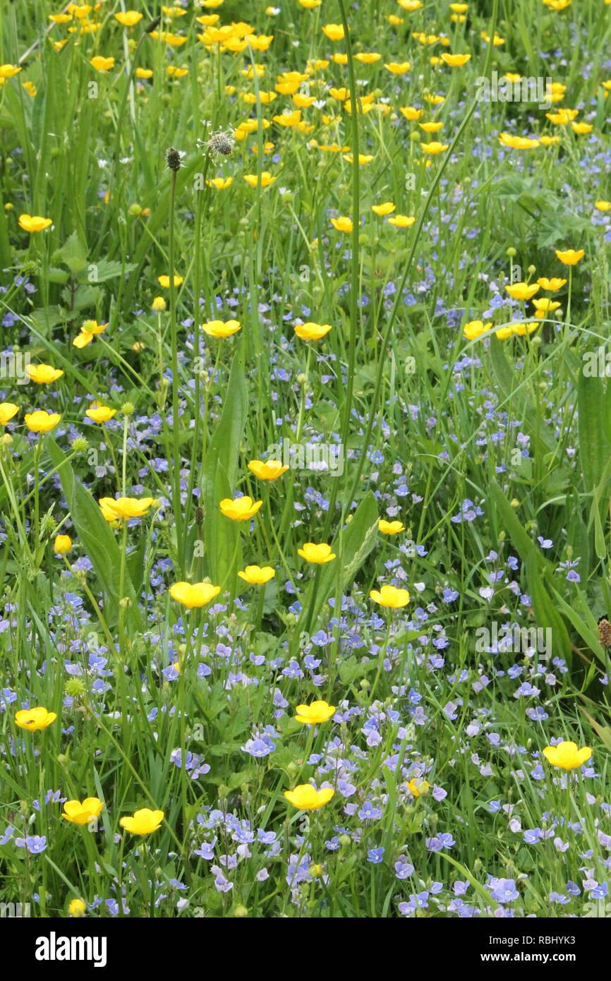 Fleurs de prairie Photo Stock