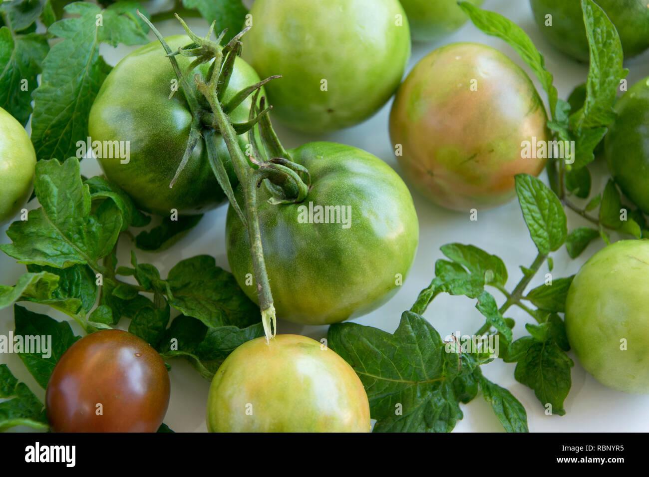 Frais mûrs tomates jardin vert sur fond blanc, de l'espace pour le texte Photo Stock