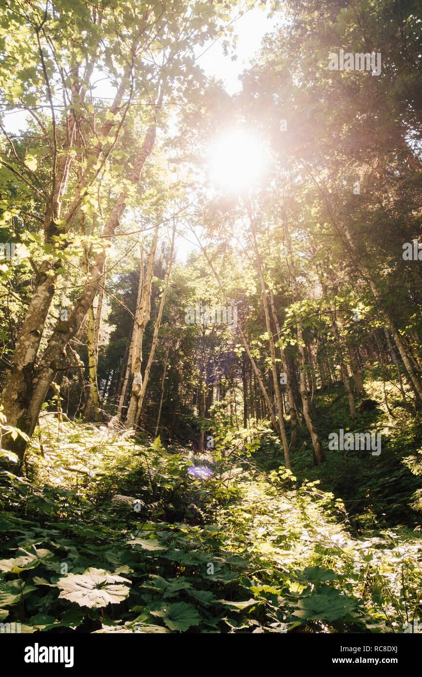 Forêt en Nuziders, Vorarlberg, Autriche Banque D'Images