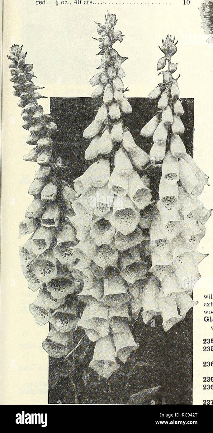 . Dreer's garden book 1931. Les catalogues de graines de pépinière; catalogues; Matériel et fournitures de jardinage graines de fleurs; Catalogues Catalogues; Graines de legumes fruits; Catalogues Catalogues de graines. ^flEHRyABREEH .mrSV^^minii DIANTHUS roses ou roses annuel unique toutes les roses annuel unique ont de grandes fleurs de 2 à 3 pouces de diamètre; leur nombre et l'éclat des couleurs les rendent très souhaitable pour les lits et les frontières; 1 pied. par pkt. 2301 Belle pourpre. Cramoisi velouté riche. Par j'oz., 40 cts.. .$0102302 Reine de l'Est. Joliment marbré de rose et mauve fleurs. Par J oz., 40 cts 2320 Nobilis (Royal Rose) Photo Stock
