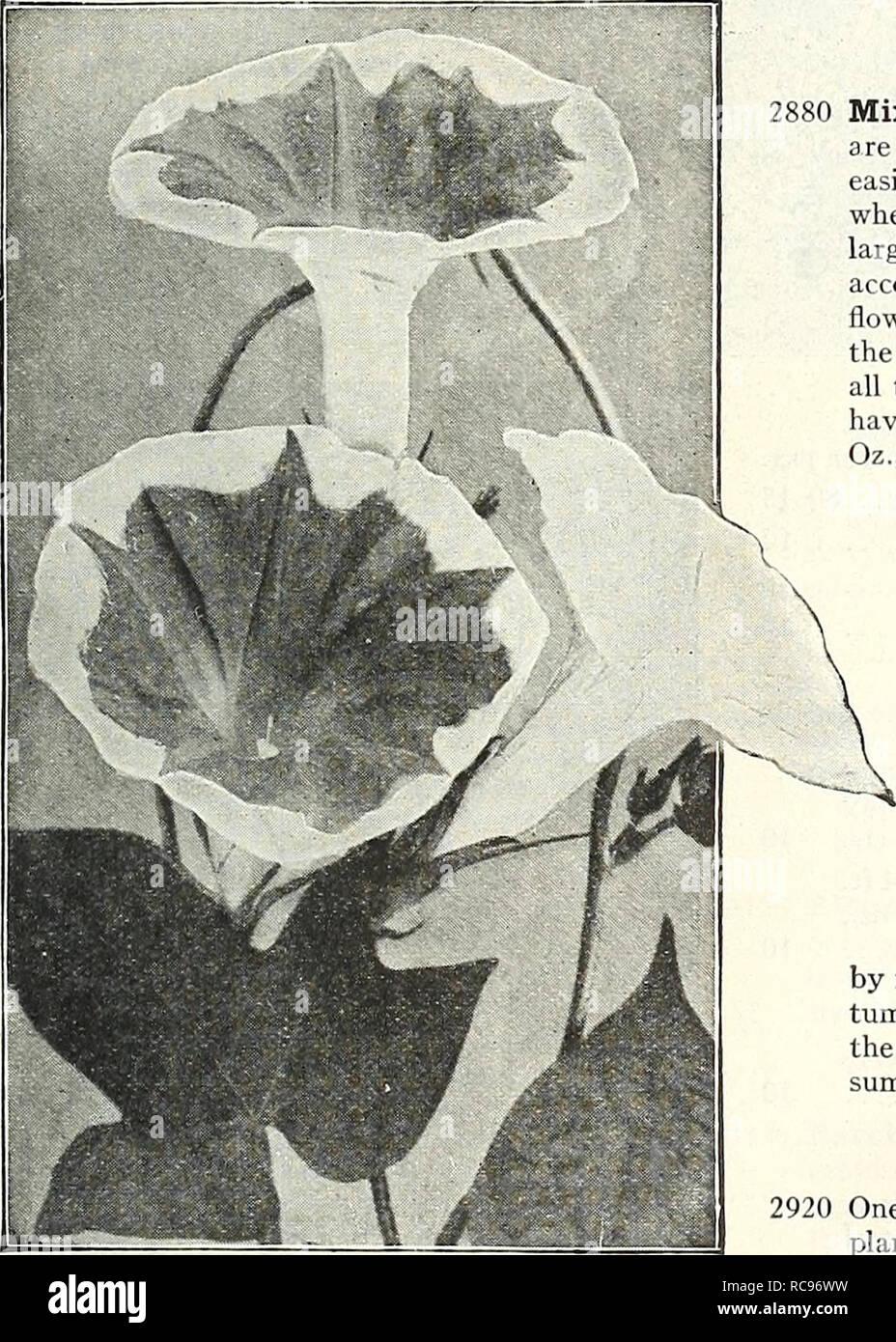 60 Garden Balsam Graines de Fleurs Mix couleur facile à cultiver Annuel Plante de jardin A025