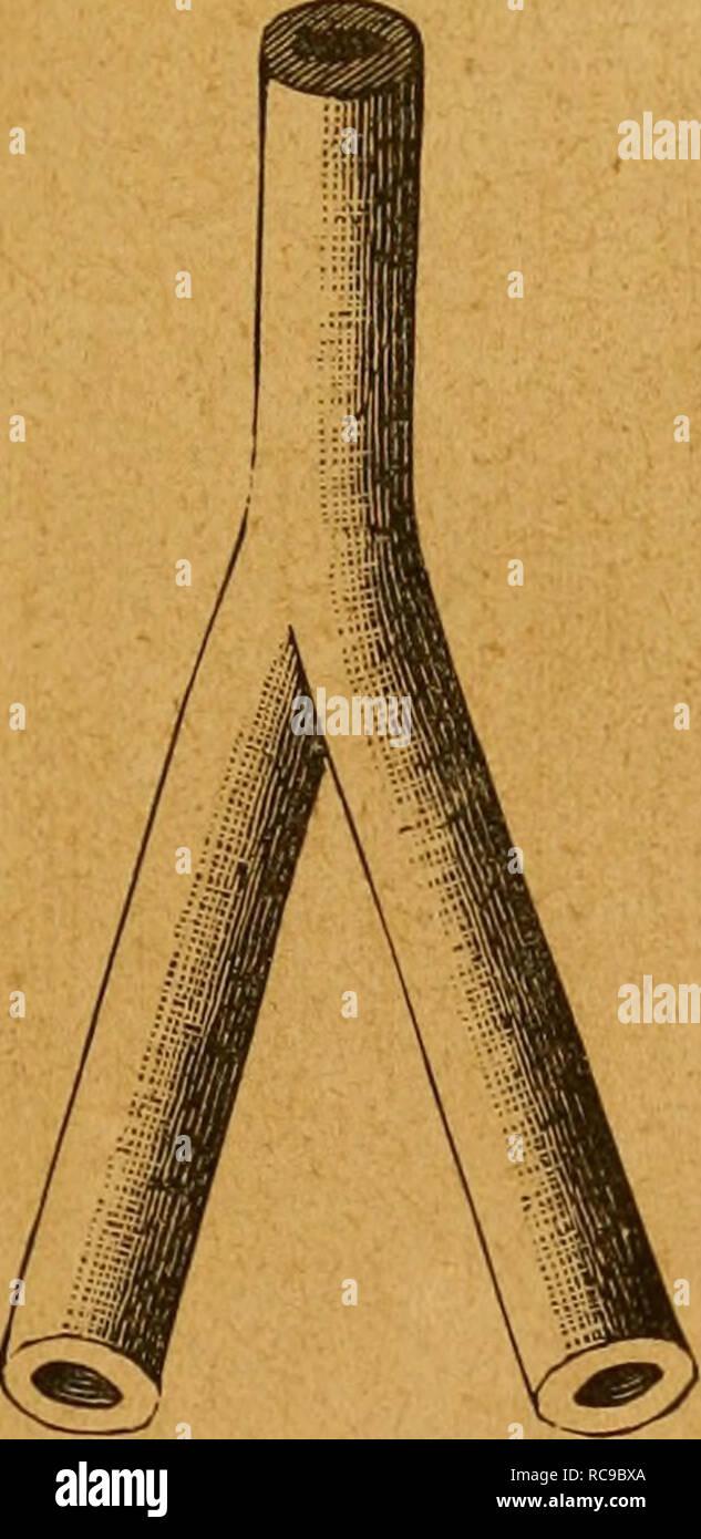 . El tabaco. Le tabac. DESCRIPCIÃN BOTÃNICA ÃREA EL TABACO-GEOGRÃFICA COMPOSICIÃN QUÃIVIICA AGRONÃMICOS AGRÃCOLA DATOS-ARTE (a) Del cultivo â(b) de la preparación ECONÃMICA de las hojas PARTE-APLICACIONES HISTORIA - LEGISLACIÃN GÃMEZ BIBLIOGRAFÃA - EMILIO FLORES - JGENIERO AGRÃNOMO. TIPOGRAFÃA MADRID DE MANUEL G. HERNÃNDEZ IMPRESOR DE LA REAL Casa de La Libertad, i6 duplicado j88q. Veuillez noter que ces images sont extraites de la page numérisée des images qui peuvent avoir été retouchées numériquement pour plus de lisibilité - coloration et l'aspect de ces illustrations ne peut pas parfaitement ressembler à l'œuvre originale.. Banque D'Images