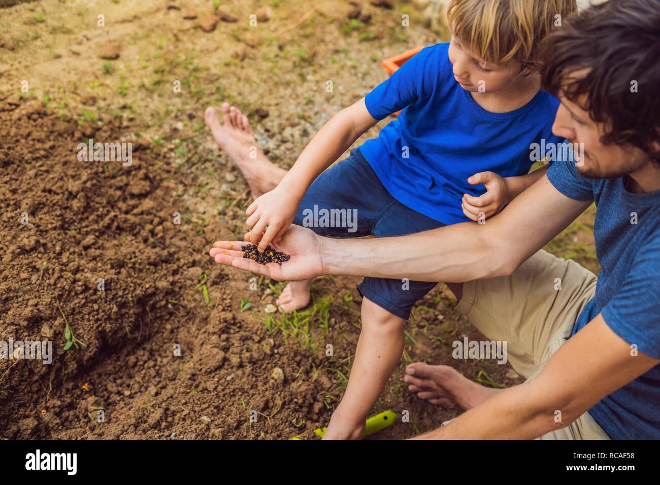 Père et fils le jardinage dans le jardin près de la maison Banque D'Images