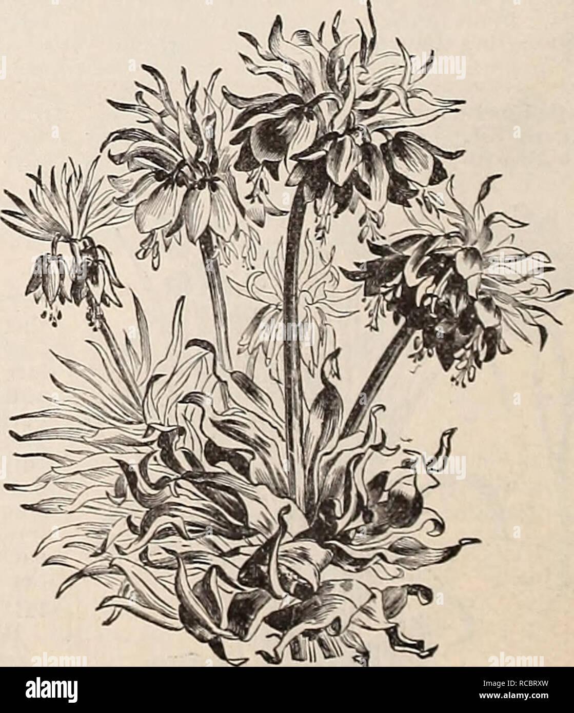 Quel Fruit Planter Au Printemps dreer catalogue automne 1895 de :. ampoules (plantes