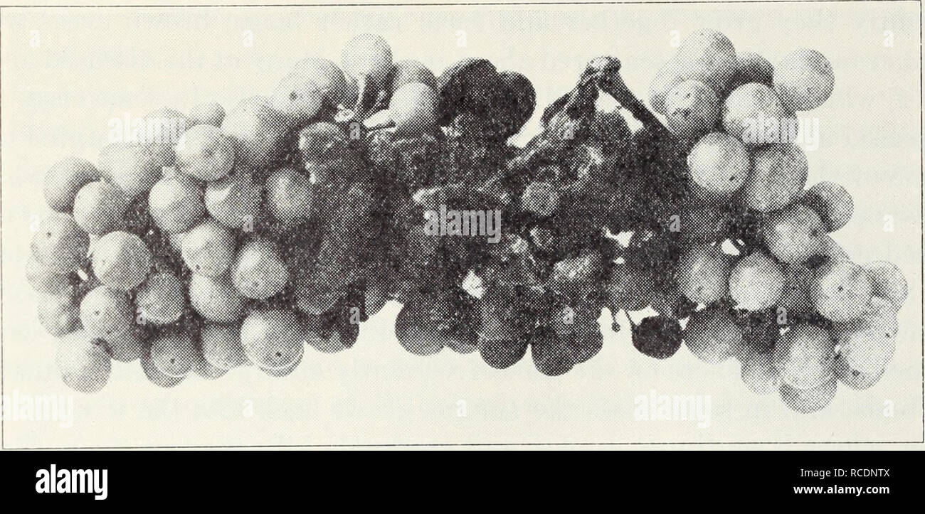 noir butin propagation pics