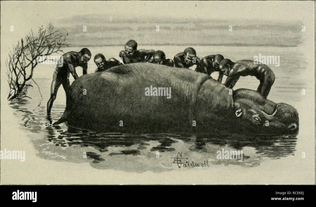 . Chasse à l'éléphant en Afrique équatoriale de l'Est; le fait d'être un compte de trois ans de chasse à l'ivoire sous le mont Kenya et parmi les sauvages de l'Lorogi Ndorobos montagnes, y compris un voyage à l'extrémité nord du lac Rudolph. La chasse à l'éléphant; la chasse. Retourner à LAKE RUDOLPH 347 le long de notre chemin, et j'ai pensé qu'il Hkely il y a peut-être pas très loin sur les éléphants, dont il serait sûr de trouver des traces si dans le quartier. Après une absence d'environ deux heures, il est revenu avec la nouvelle qu'il avait en fait vu les éléphants eux-mêmes, d'alimentation et de l'alcool dans certains eau haute-l'herbe pousse au bord o Banque D'Images