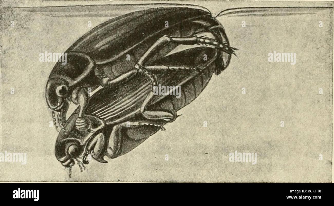 ad787a4ce1034 Die forstinsekten Mitteleuropas. Ein Lehr- und handbuch. Les arbres   les  insectes .
