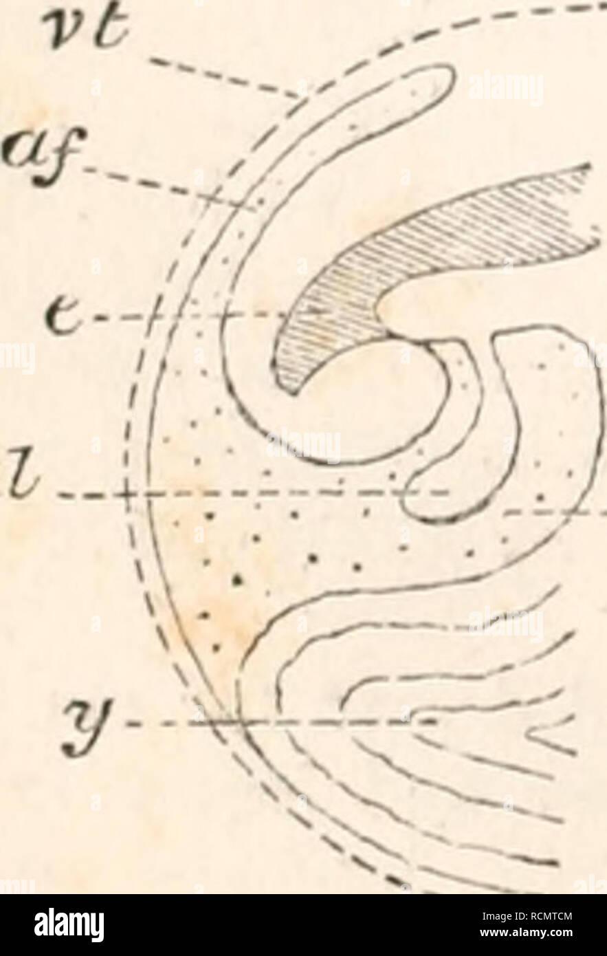 . Les éléments d'embryologie. Poulets -- les embryons. G al-i:. - J?p JBP AC-4U-J al-.-'&Lt;. Veuillez noter que ces images sont extraites de la page numérisée des images qui peuvent avoir été retouchées numériquement pour plus de lisibilité - coloration et l'aspect de ces illustrations ne peut pas parfaitement ressembler à l'œuvre originale.. Foster, M. (Michael), Sir, 1836-1907; Balfour, Francis M. (Francis Maitland), 1851-1882. Londres, Macmillan et co. Photo Stock