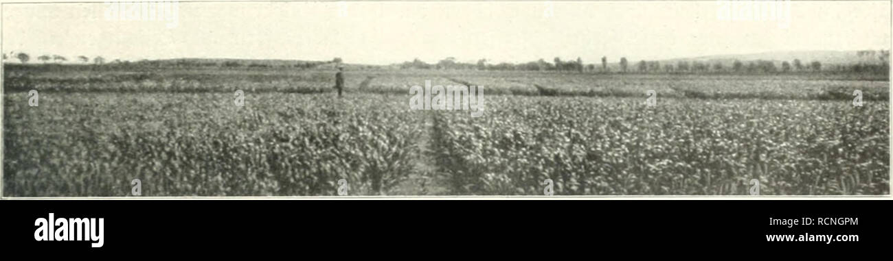 ". Die deutsche Landwirtschaft unter Kaiser Wilhelm II; Mutterland Kolonien und. Hrsg. von Dr. Dade. L'agriculture, de l'Agriculture, de l'Agriculture. Ricbrid ircrth 5?6. 4'2i. ^Jcüanjicbt crnlcbcully6cr 33fcl^cr. 3ur3cit j'mi&gt; ce: Juli, 5itai)crfrcnc ^5II,^ujtric oblttiiann ^, r', f(CUH-?t&gt;(c, tiâ¢l^^utib olâ un o Magnum bonura. Slugcrbcm trirb iircpcr Csdccst^J tcr auf fcn-ijà ltii 2001-2002 ic-^Clâ¢(.â ^lcid1C1l^^rüfuiiycu c -l neuer vierten, ^¤hrtcftc bctrà crcn t>enncbrt ^unb uni Â""^utbau bcranciejocten irerbcn Saati. Sic ifcitung ^cr C(air,en ^flün3CN5ud>t [cct dans ^eince botünijc iiünbcn cn. Photo Stock"