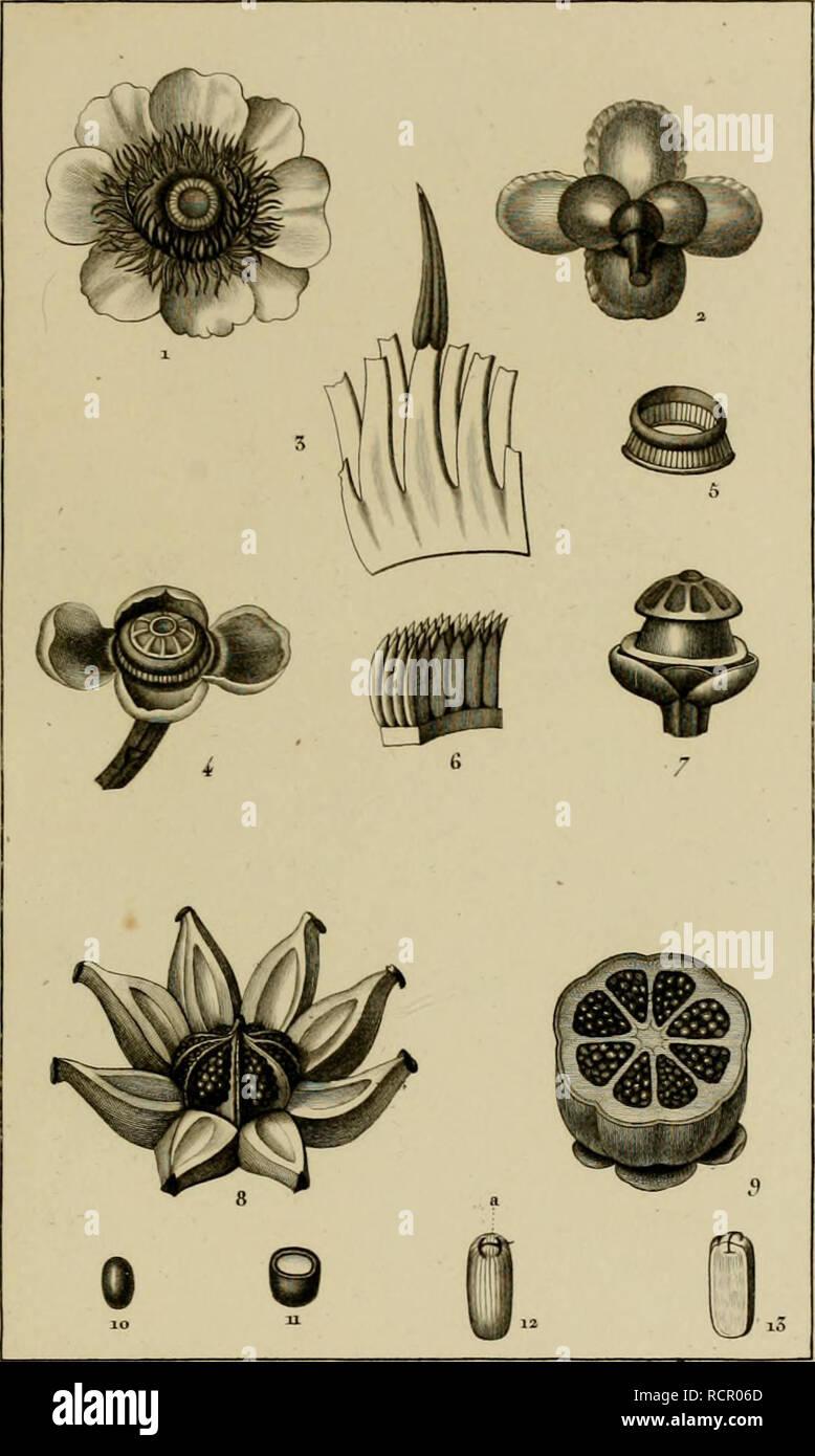 """. Dictionnaire des sciences naturelles, dans lequel on traite méthodiquement des différens êtres de la nature, considérés soit en eux-mêmes, d'après l'état actuel de nos connoissances, soit relativement à l'utilité qu'en peuvent retirer la médecine, l'agriculture, le commerce et les artes. Suivi d'une biographie des plus célèbres naturalistes. L'histoire naturelle. BOTAJIQUE. Le DI (OTYJ.Ãl)ceux. ' (NittiCèr.. 2&tr/min otk CLUSEEK vose . Jf,-^u/fr nân>f/Tt. rz-nous LA. Tosea.. /I.i,J //â ¢^ rraruf^ nat (â. tivorfe j régie, DOT/tU'nt.% â fa&amp;'t'e Je /a-nie rrn .""""S.A/e/tiite^^ ^7ef Banque D'Images"""