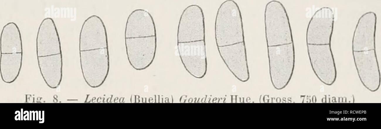 ". Deuxième expédition antarctique francaise (1908-1910). Histoire naturelle -- Antarctique; expéditions scientifiques -- Antarctique; antarctique. s. - (Bufillia Voudieri Lecidea) Wui^. (Montant brut). ""Donc diaiii.) Les lichens. 131 0,2-0,2."""" moulin. crassM', (la longe ( podiccllatic dcmiim|uasi ca slrato IhalliiK » conliiiuo contiguaî apposer.c, et en superficie. hovigatte Earuni corlcx pusculis nubilatus atralis cor- et 10-30 un crassus, cujus hyplia lasligiataj;, je [j. crasste, verticales aut paulum obliqua', nunc simplexes, nunc et raniosa- surplus, passim meatus pra'^ arliculis bentes articulata, sjjliaîroi- d Photo Stock"