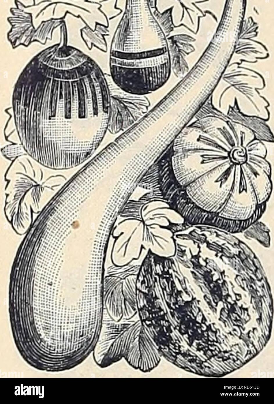 """. Currie Bros.' guide horticole: printemps 1888. Pépinière Wisconsin; Catalogues Catalogues de graines de fleurs, graines (plantes); catalogues de graines de plantes ornementales; catalogues, catalogues, matériel et fournitures de jardinage Catalogues. 52 Qjrrii^^ortieultural j/ Bros Guide.- ^^^f-OURDS sil ou ^^ namental/M. Beau grimpeurs de iiRy yiSj ^^ « growtli- duction rapide, r.s^^' moom '""""^ ^»^ ^particulière'"""" ^ ^bureaux .1!j g^m] diverses formes. [^^^ ^^^^dsi' y offres annuelles. '7^^^^^^^ Bottle-Shaped^^5 '' T'i^^ Bottle-Shaped iatiire, min- 5- l'ancienne â calebasse balancier ancienne gourd ,5 Dipre Banque D'Images"""