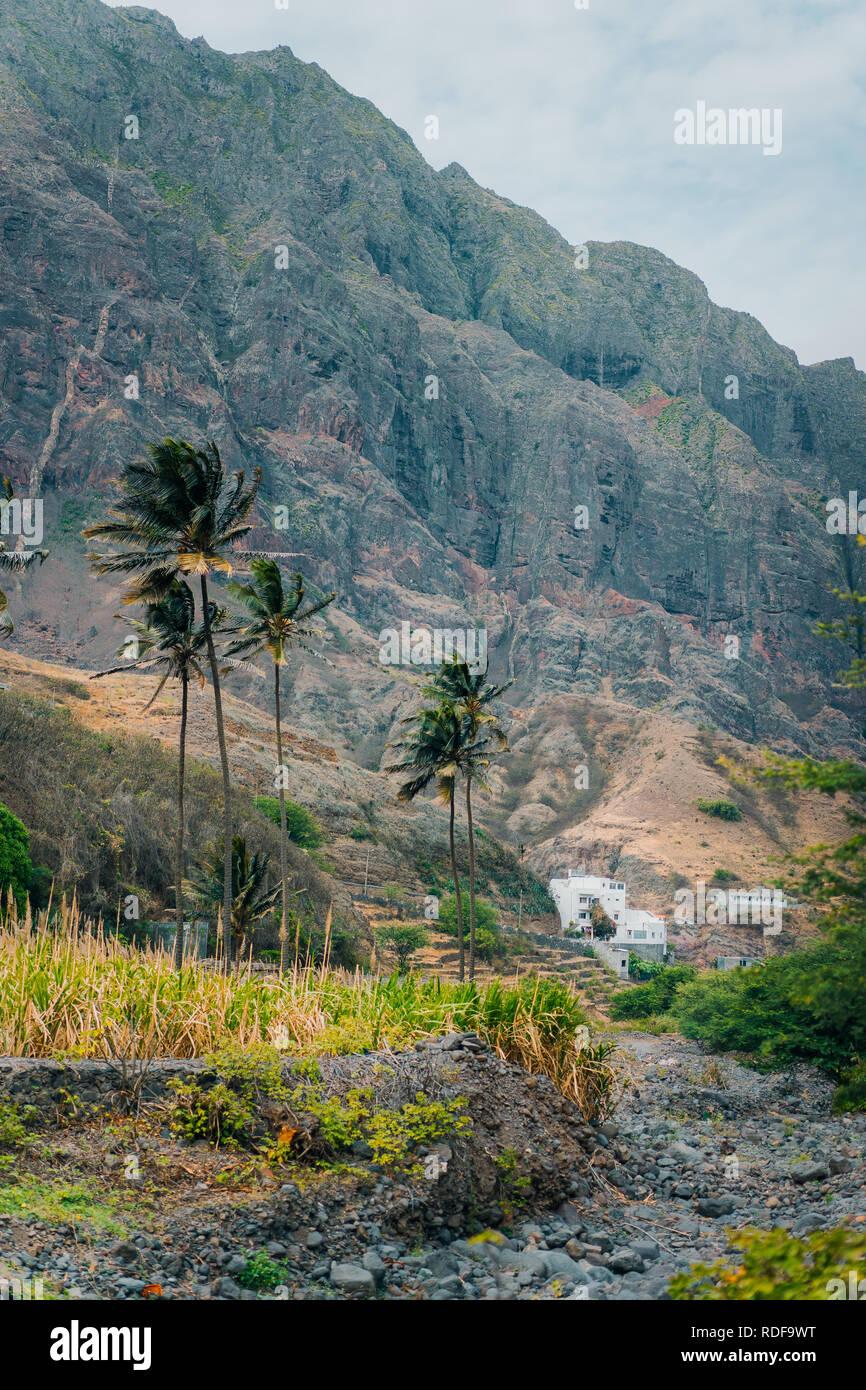 1c5c11b2b3a Paysage avec palmiers contre les énormes montagnes dans la vallée de Paul