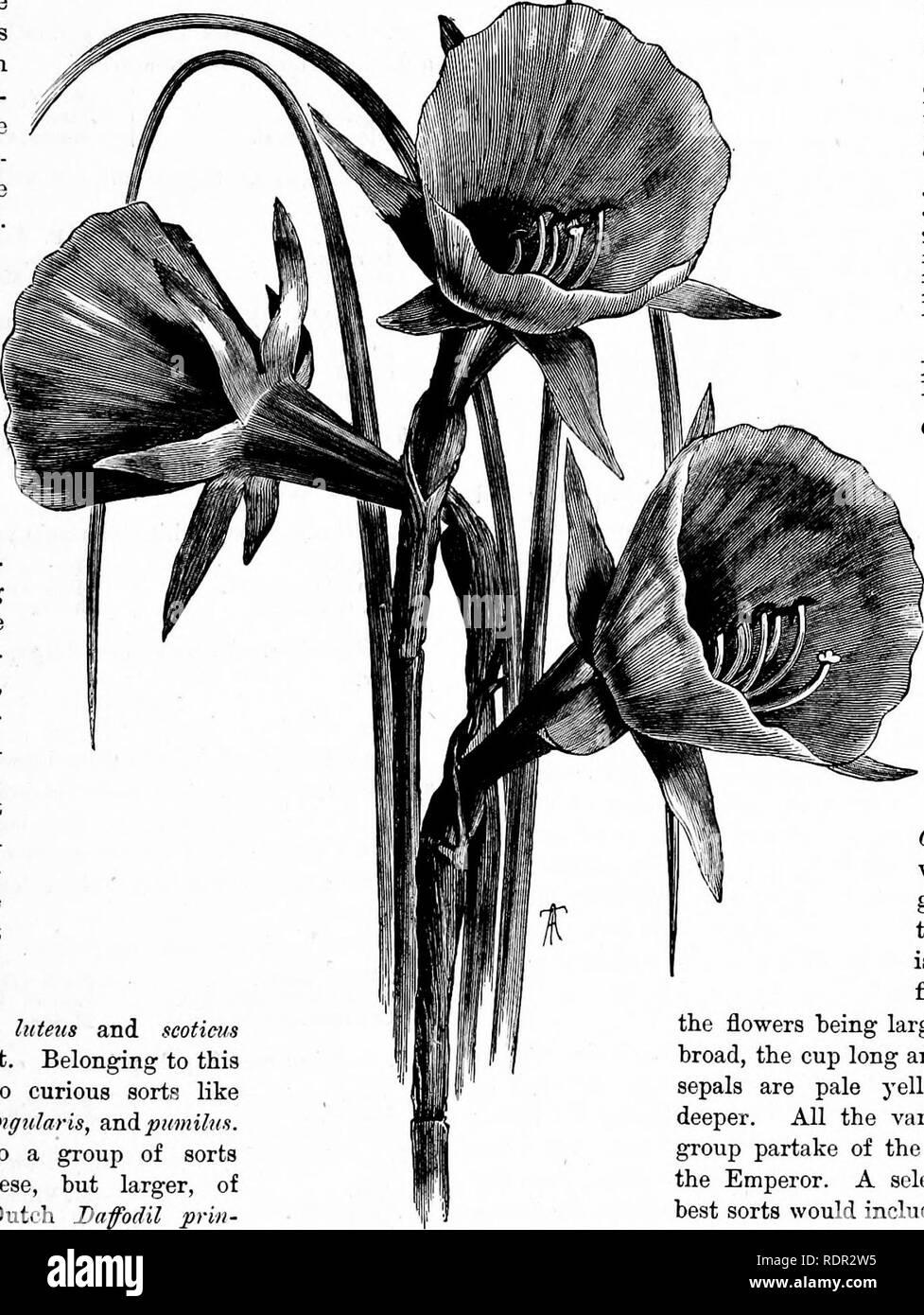 Plante Pour Cuisine Sombre plantes, graines et bulbes sort grande rose pourpre graines