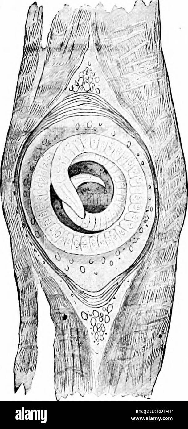 Premières leçons en zoologie. Zoologie. IVORMS CRJYFISH, 100, 147 ...