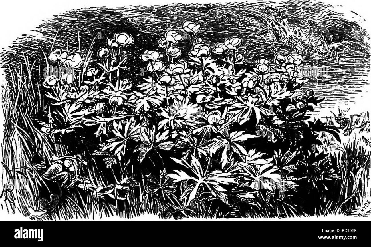 Blühwunder fabuleux des couleurs exot pour le jardin I I araignées-Fleur