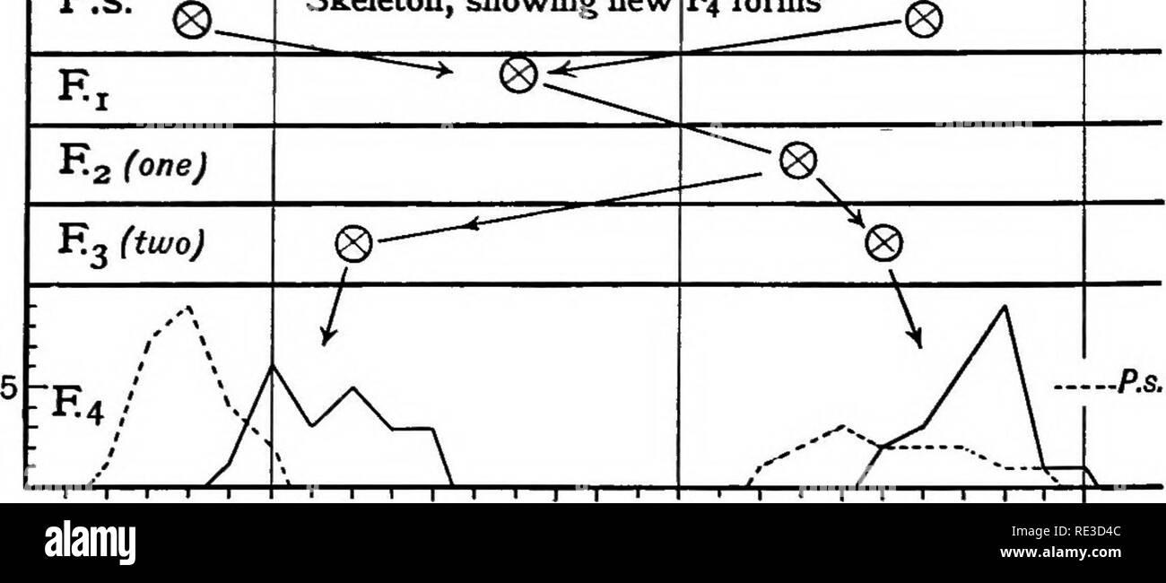 """. Le plant de coton en Egypte, des études de physiologie et génétique. Le coton Le coton. r^un P.S. Charara x 3-5 40 ^^^ .^- D 52 X Truitt, squelette montrant-nouvelle. F4 King 4-5 3-0 3-5 4-0 4-5 Formes Fig. 63 EUR 64.-Locuij de l'ovaire. 4'8, et un 3""""1 à 3*vrai race 2. D'autre part, 3'3 s'est désintégrée en un nuage de points à partir de 3""""1 à 37, comme l'a fait aussi un 3""""6. Une 3'9 plant semblait vrai race autour d'une moyenne de 4'1,. Veuillez noter que ces images sont extraites de la page numérisée des images qui peuvent avoir été retouchées numériquement pour plus de lisibilité - coloration et l'aspect de ces illustrations ne peut pas par Banque D'Images"""