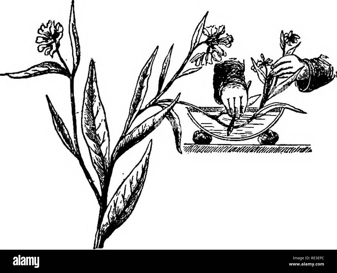 Chambre Humide Que Faire texte pratique-livre de physiologie végétale. physiologie