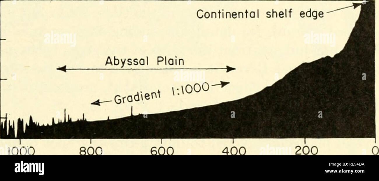 . La terre sous la mer: l'histoire. Fond de l'océan; géophysique marine. SECT. 2] plaines abyssales 321 collines abyssales contiguë à la grande chaîne de montagnes sous-marines comprenant l'Atlantide, Platon, Cruiser et grand météore. L'apport en sédiments a été suffisante pour que les sédiments de l'étang et de créer une plaine abyssale dans le domaine de la profondeur maximale. Au sud d'une ligne joignant les îles Canaries et d'une plus grande sous-marin Meteor, les collines abyssales à l'ouest de la plaine ne forment pas une frontière solide mais simplement dissiper l'énergie des courants de turbidité, qui sont alors en mesure d'atteindre le maximum de l'axe dej)e plus à l'ouest (Fig. 7). S Photo Stock