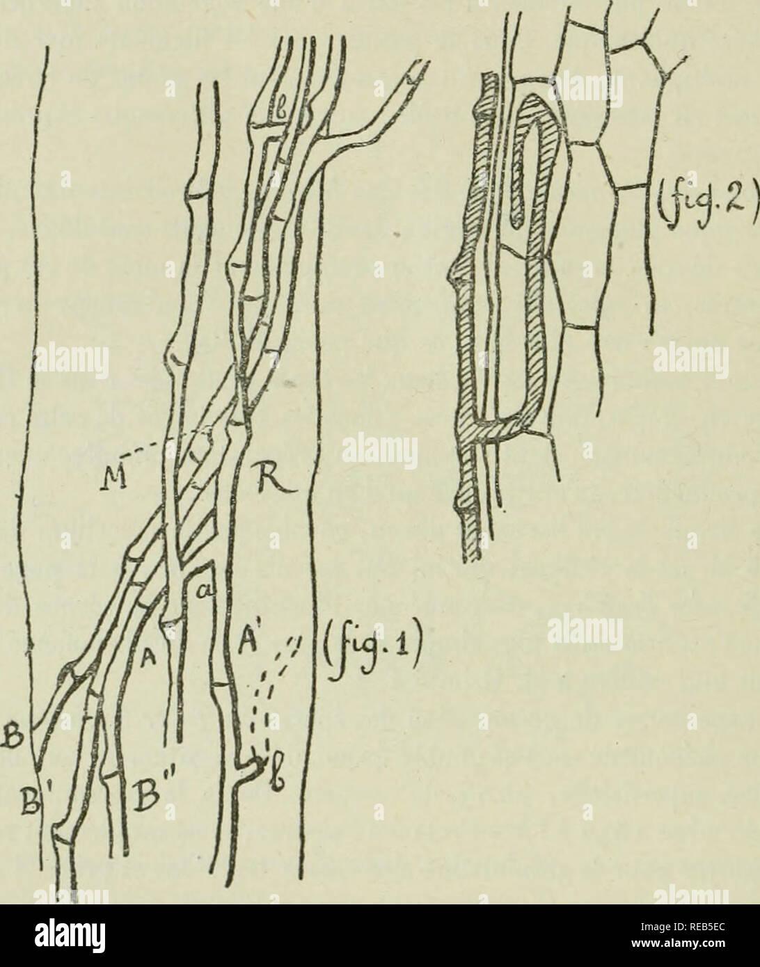 . Congrès international de sylviculture, tenu à Paris du 4 au 7 juin 1900, sous la présidence de M. Daubrée. Compte rendu détaillé. Les forêts et la foresterie. -1-9.( 610 )&Lt;^- UE juillet 1898, j'ai fait enir du Ventoux de Bedoin, provenant d'une place en préparation, des plantes de thym, lavande et sarriette. Examen de ces plantes par M. Ray. - FfParmi les plantes recueillies sur une place en pre'réparation, il y en a de comj)lètcnient flétries et desséchées, d'autres sur le point de l'être et l'on ne trouve de pieds_bien portants qu'autour de l'espace occupé par les pieds malades.. tQuand sondages sur Photo Stock