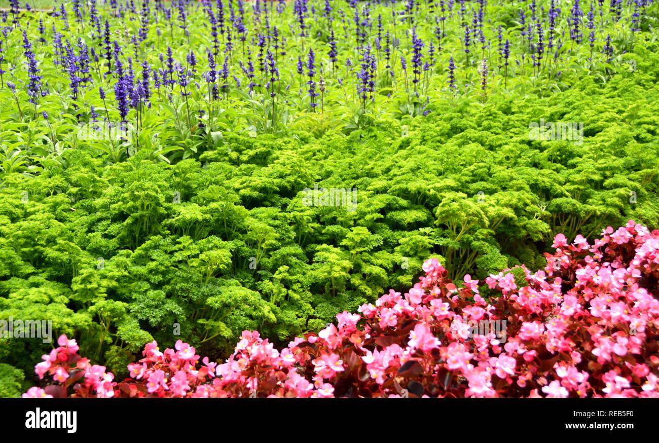 Une simple mais efficace système de plantation d'été au Wellington Botanic Gardens Photo Stock