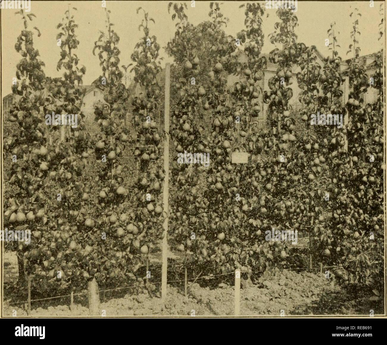 Arbre Fruitier D Intérieur les arbres fruitiers nains ;. les fruits. des formulaires