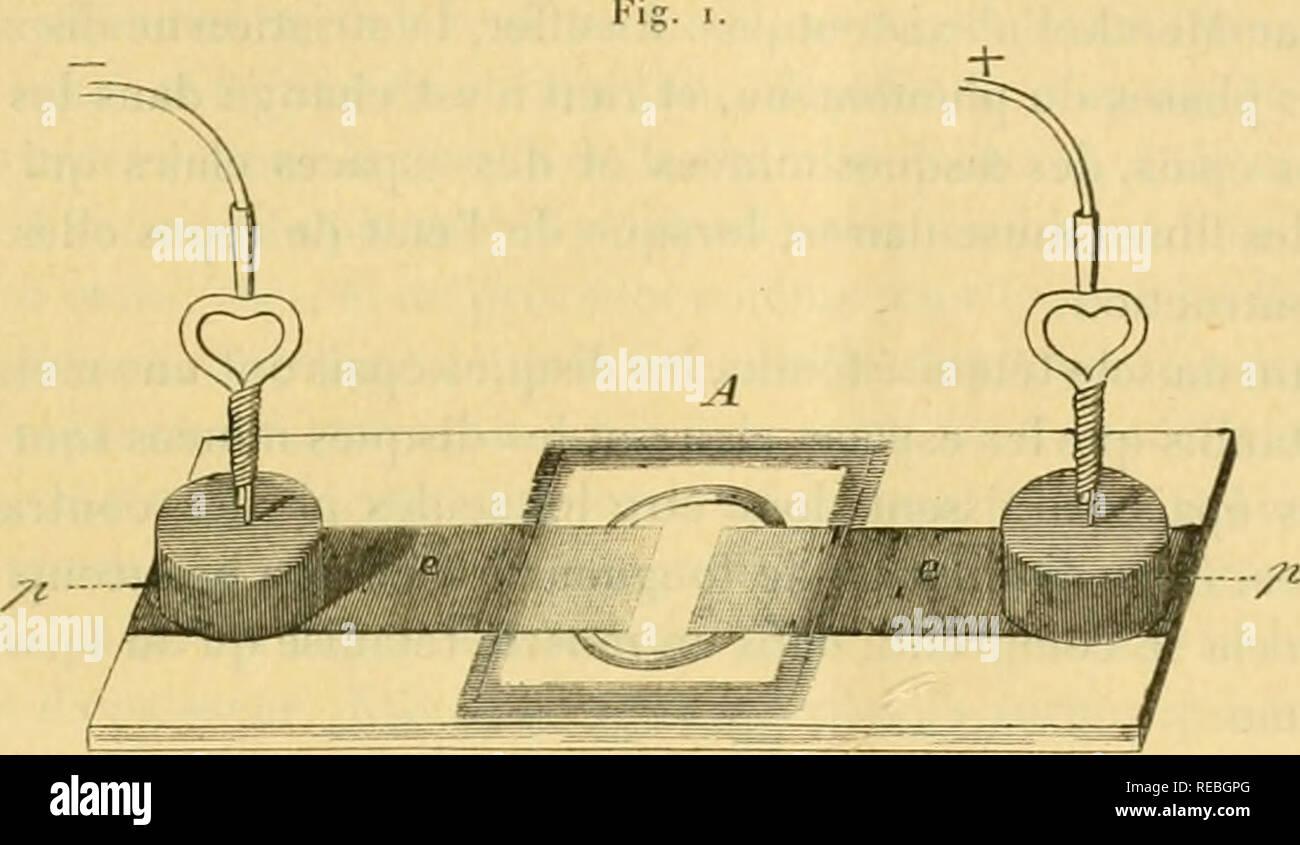 . Comptesrendusheb1101890acad. es naturelles. ( 6.5 ) fils clo l'appareil électrique par deux masses de plomb cylindriques qu'on laisse simplement reposer sur les bandes de papier d'étain (fig. i). Ces masses sont percées à leur centre pour laisser passer un fd de platine, que l'on répond au-dessus d'elles (Gy'. 2). C'est par ce fil que passe le courant. Sa partie repliée est exactement aj)pliquée sur la feuille d'étain par le poids de la masse de plomb.. A, porte objet électrique; e, électiocJta japiei- de |d'cUin; p, masses de plomb serviteur à élnblir le contact des fils conducteu Banque D'Images
