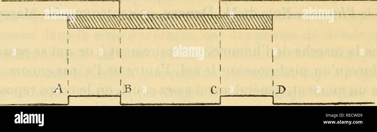 """. Comptesrendusheb1001885acad. es naturelles. ( J5j8 ) marche, en faisant varier le nombre des ji.est de 4Â"""" à loo par minutes, sur la Fig. I.. Inscription électrique de la durée du lit oppui, AD. Durée de l'appui d'un pied. BC. .. Levé. AB. Â"""" Double appui. AC. Â"""" Demi-cadence. un construit lafig. 2, dans laquelle les Fréchette©quences des passent portées sur l'axe des abscisses et les durées comptées sur les ordonnées. La courbe su- Kig. J.. Veuillez noter que ces images sont extraites de la page numérisée des images qui peuvent avoir été retouchées numériquement pour plus de lisibilité - et l'aspect de coloration Banque D'Images"""