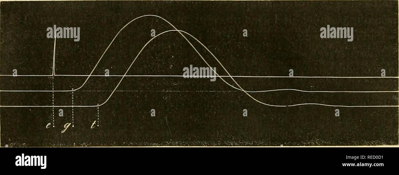 """. Comptesrendusheb73acad. es naturelles. i 920 ) Â"""" suivant les procédés ordinaires de la myographie, sur fixe, dans nue première expérience (ligne j), le point auquel correspond l'électrique d'excitation destinée aux nerfs, et l'on obtient en e le signal de exci- tation celte.. Â"""" Dans une seconde expérience (ligne 2), le fait agir l'excitation, non pas sur la torpille, mais directement sur le nerf de la grenouille. Sur obtient un tracé qui montre qu'un temps cg, assez considéérable, s'est écoulé entre l'excitation et le signal du mouvement: c'est la mesure du temps con- sommé par la Banque D'Images"""