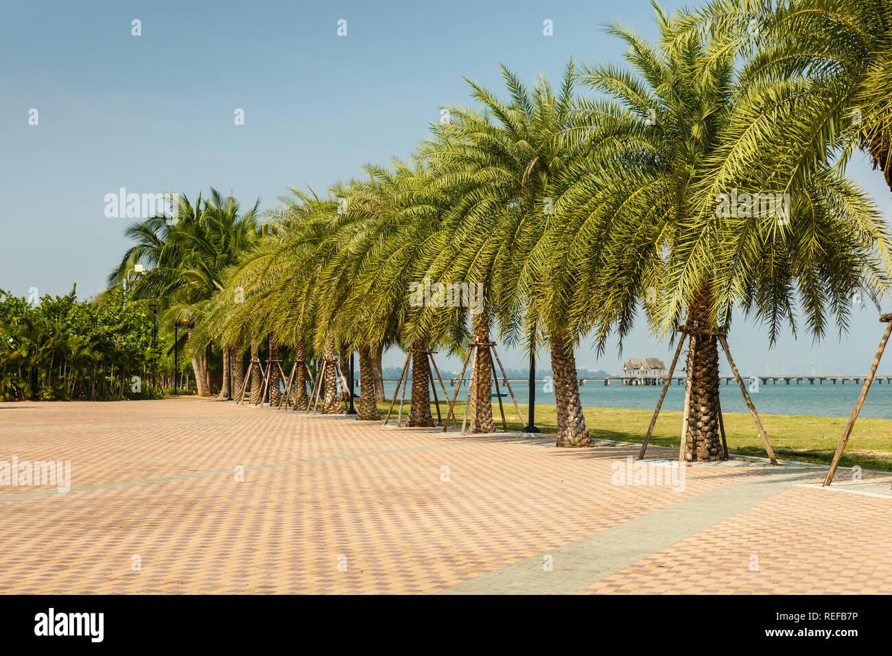 Allée de palmiers sur la côte du Golfe de Siam, beau paysage Thaïlande Banque D'Images