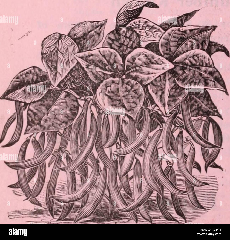 Cole\'s garden annuelle. Graines de legumes catalogues ; pépinières ...