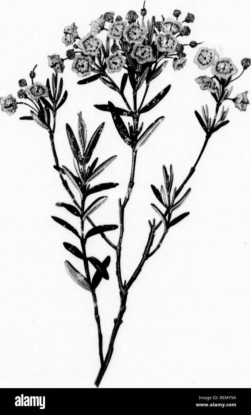 . Fleurs des champs et des forêts [microforme]  de l\u0027eau originale,dessins  couleur après la nature.