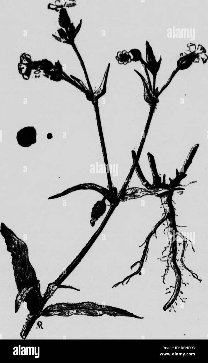 """. Le jardin d'un dans la province de Québec et différentes moyens de les détruire [microform]. Mauvaises herbes; Ennemis des cultures; les mauvaises herbes; ravageurs agricoles. 45 â lor Atte, à cheÂ"""", de¯Ã ît que j'^ J il pkut petits tui inte oïdi l' que l'on oiner à je faire otntne la ir gej ni nierdeferd. FiG. 12. Passb-Flbuii.. Veuillez noter que ces images sont extraites de la page numérisée des images qui peuvent avoir été retouchées numériquement pour plus de lisibilité - coloration et l'aspect de ces illustrations ne peut pas parfaitement ressembler à l'œuvre originale.. Dallaire, O. -E; Québec (Province). Département Banque D'Images"""
