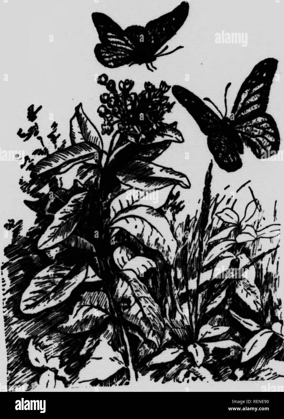 Lo Moth Photos Lo Moth Images Alamy