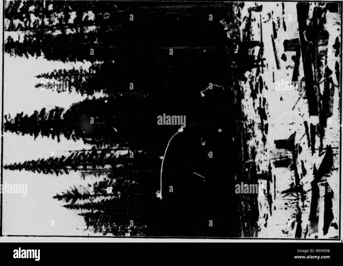 . L'état des forêts dans le nid de pie Valley (Alberta) [microforme]. Les forêts et la foresterie; ressources naturelles; Forêts; Ressources naturelles. eepneH • prcservation. pieds, ne a1 salon enfin être itill rees ensoleillée de vallées, de rupture de la ie enfarinée le , ont des r ont d, l:h sont. 18- ent de l'ONU est l'herbe rhalf umed ed à ont été:ween Picea imall ce je j'•n. Veuillez noter que ces images sont extraites de la page numérisée des images qui peuvent avoir été retouchées numériquement pour plus de lisibilité - coloration et l'aspect de ces illustrations ne peut pas parfaitement ressembler à l'œuvre originale.. MacMillan, H. R. (Harvey Banque D'Images