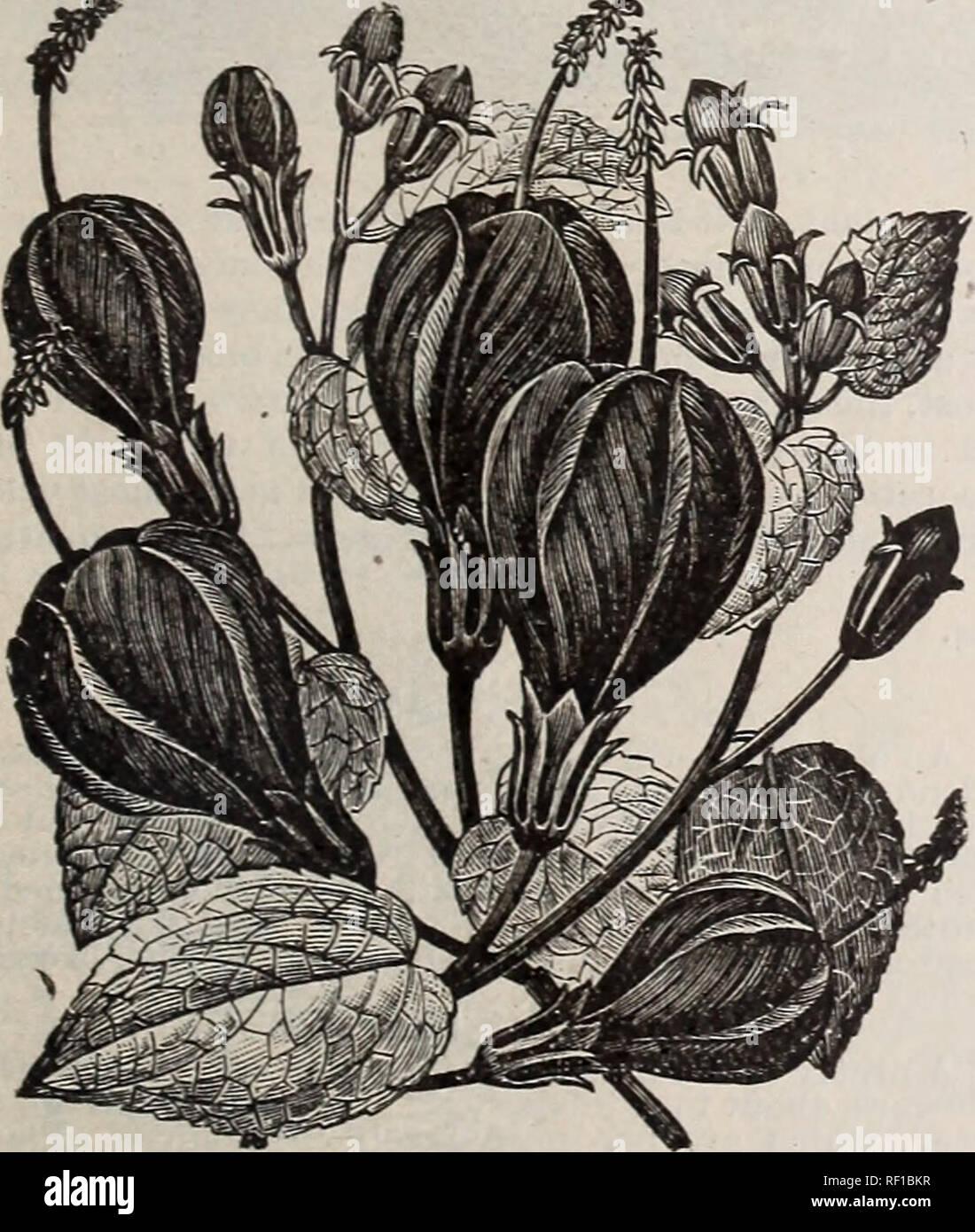 Catalogue] de jardin Cottage Rose. Columbus Ohio pépinière ; les ...