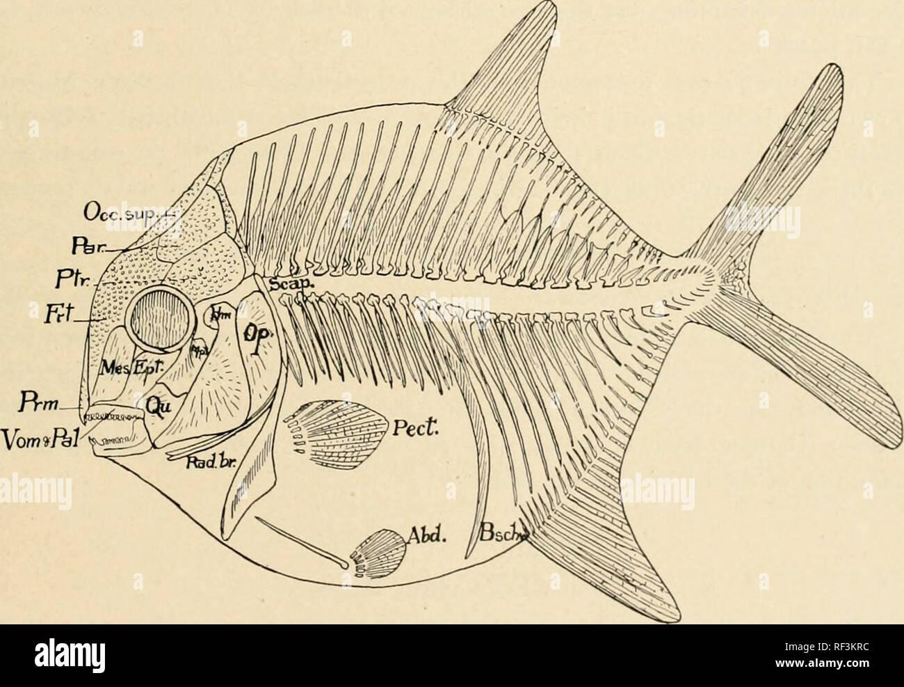 Beaucoup de poissons datant service Raleigh Caroline du Nord