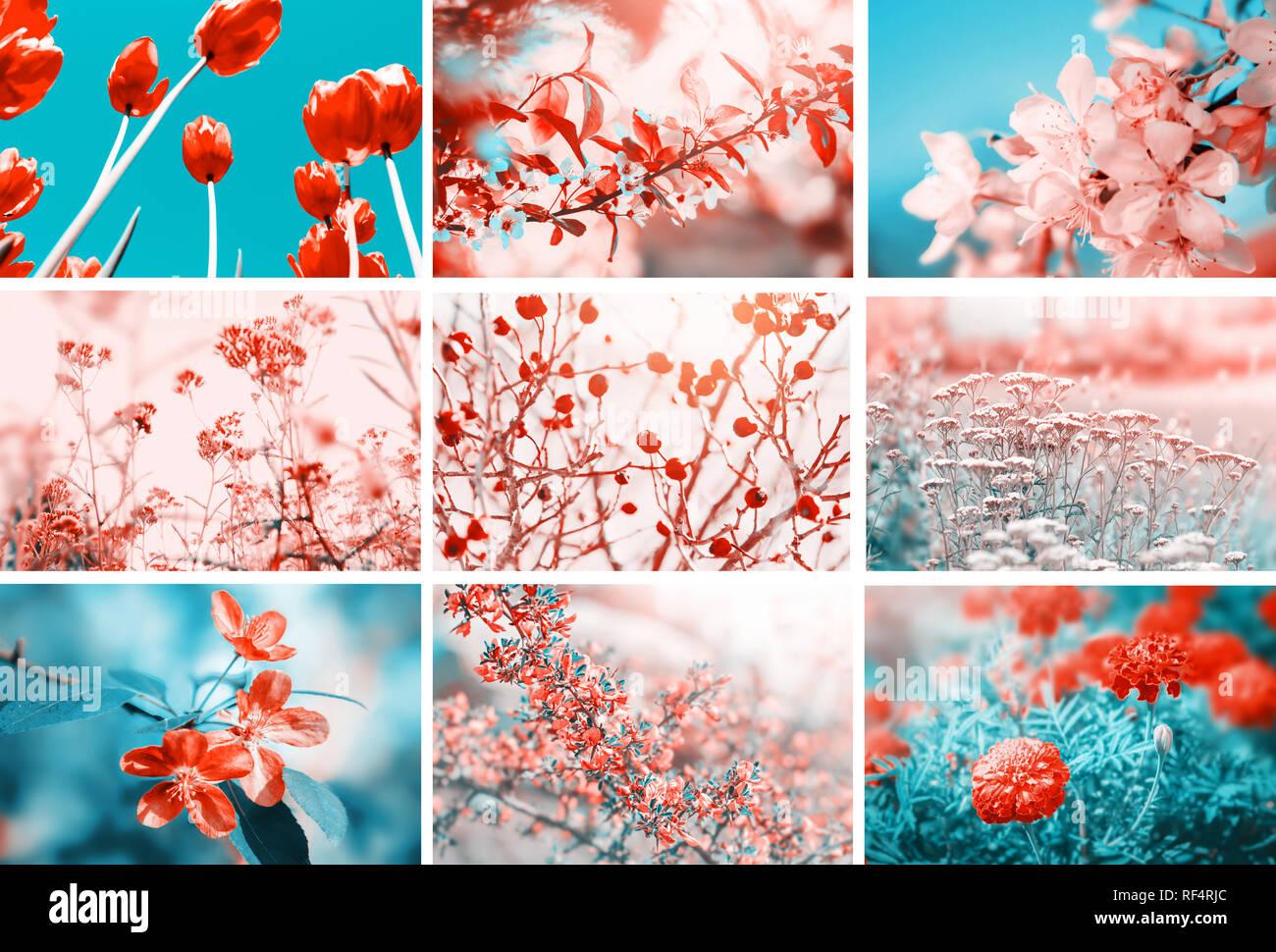 Fleurs différentes fleurit. Collage avec fleurs et plantes. Magnifique nature pastel couleur fond fleuri. Banque D'Images