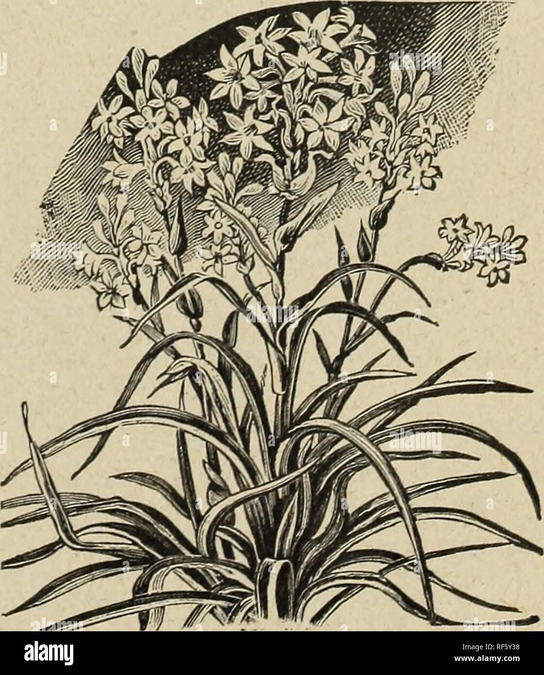 Les Plus Belles Graminées le catalogue de semences et mccullough guide de l'amateur