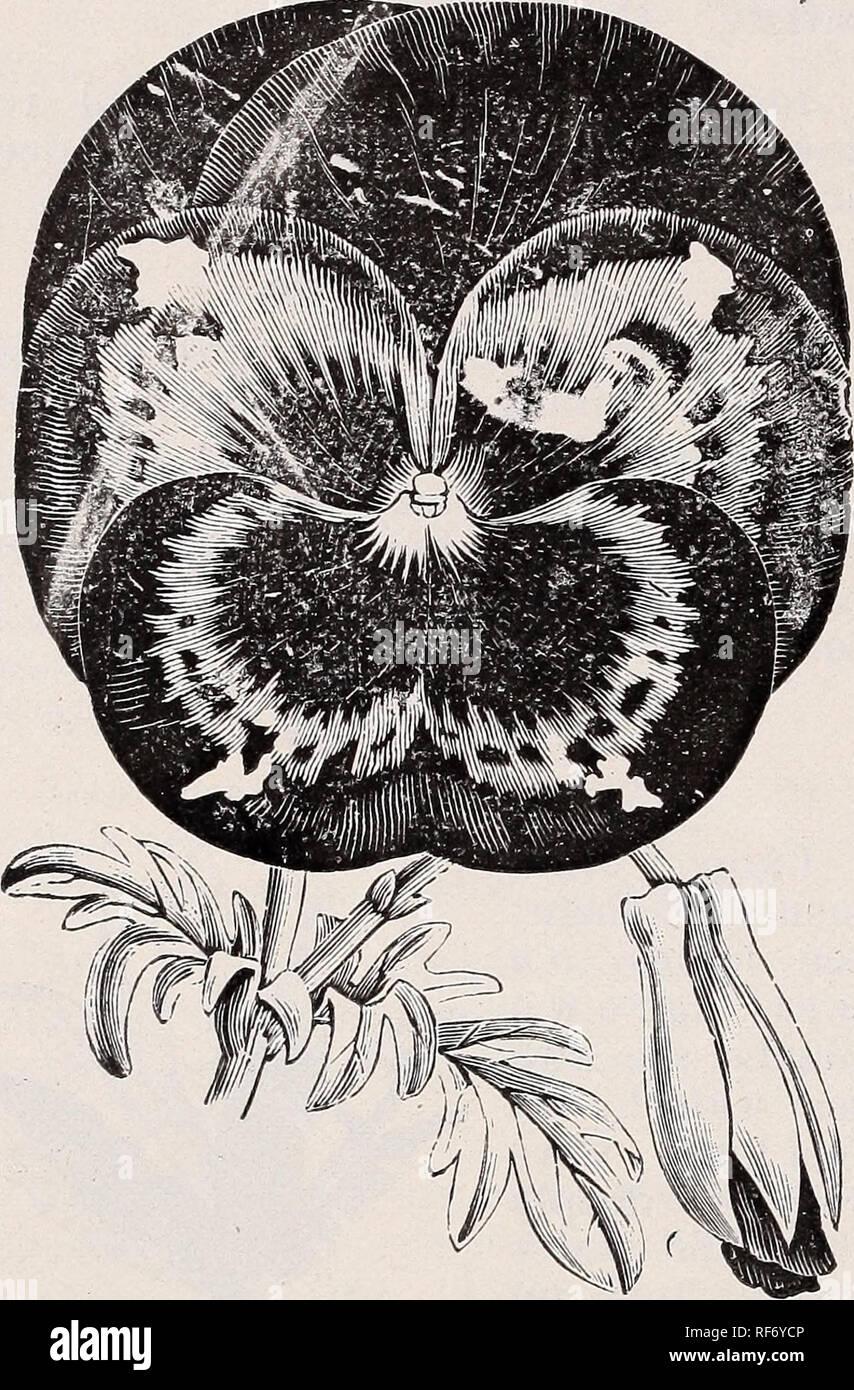 Fleurs Pour Mi Ombre liste des prix saisons 1902 descriptif : les plantes, les