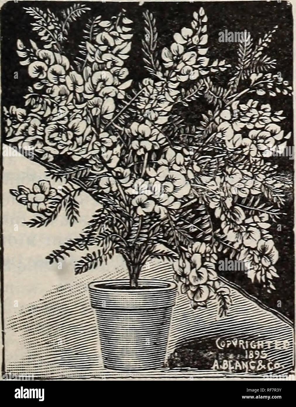 Planter Un Lilas En Pot printemps 1900. painesville ohio pépinière catalogues