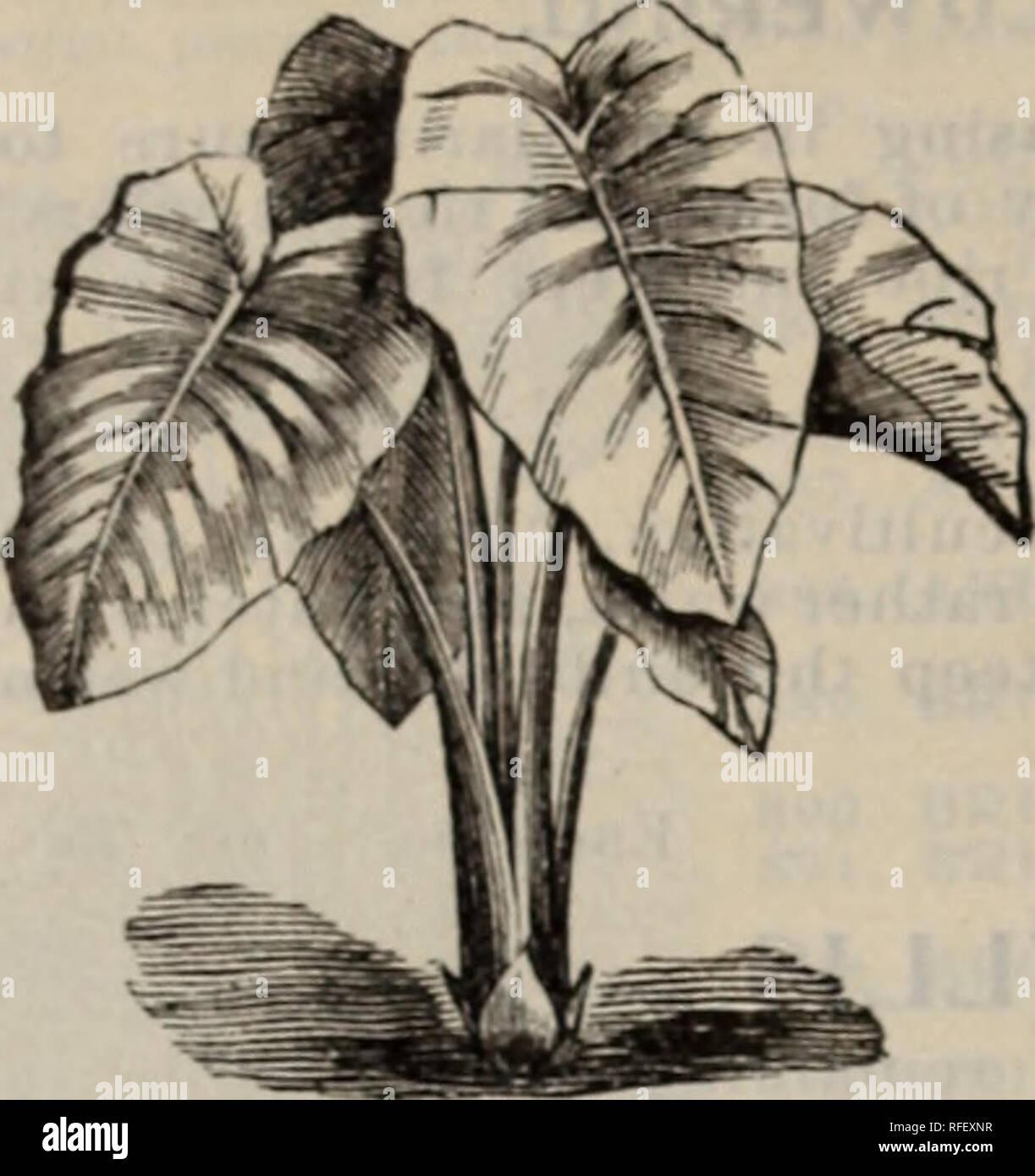 Plante Pour Cuisine Sombre catalogue de semences. pépinière massachusetts boston