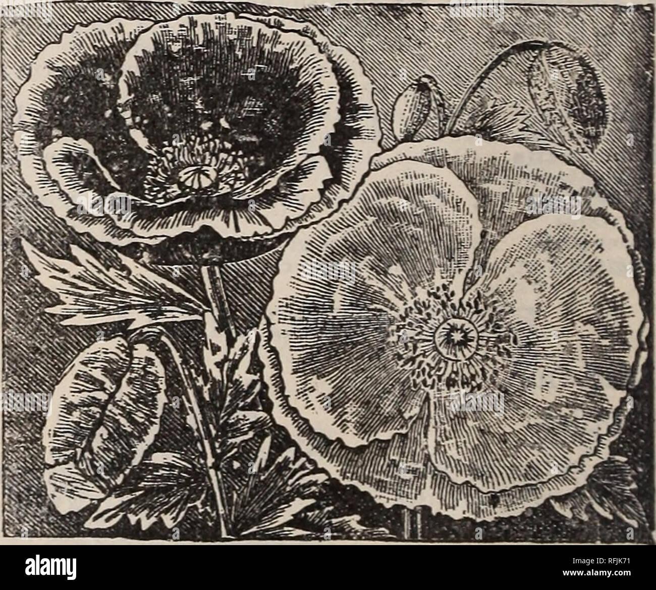 Petites Plantes Fleuries En Pot seed & ; guide des plantes. pépinière vermont brattleboro